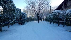 20160125_ryokudou2-1