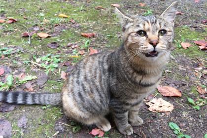 20161028_cat